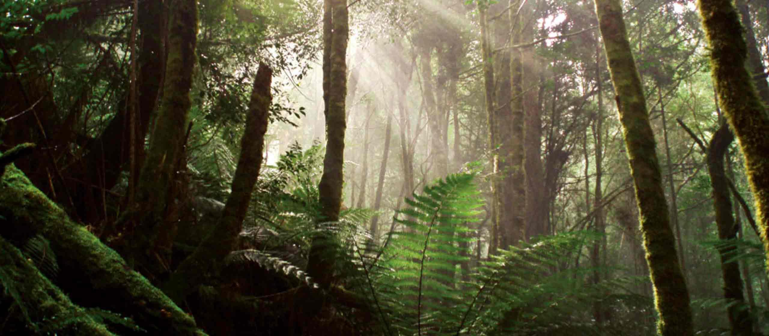 Tasmania Tarkine