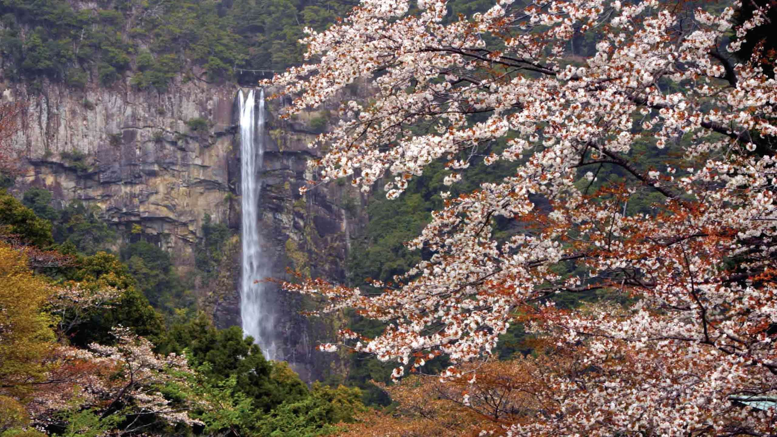 Luxury Kumano Kodo Mountain to Sea & Ama Divers 9D8N, Fully Guided