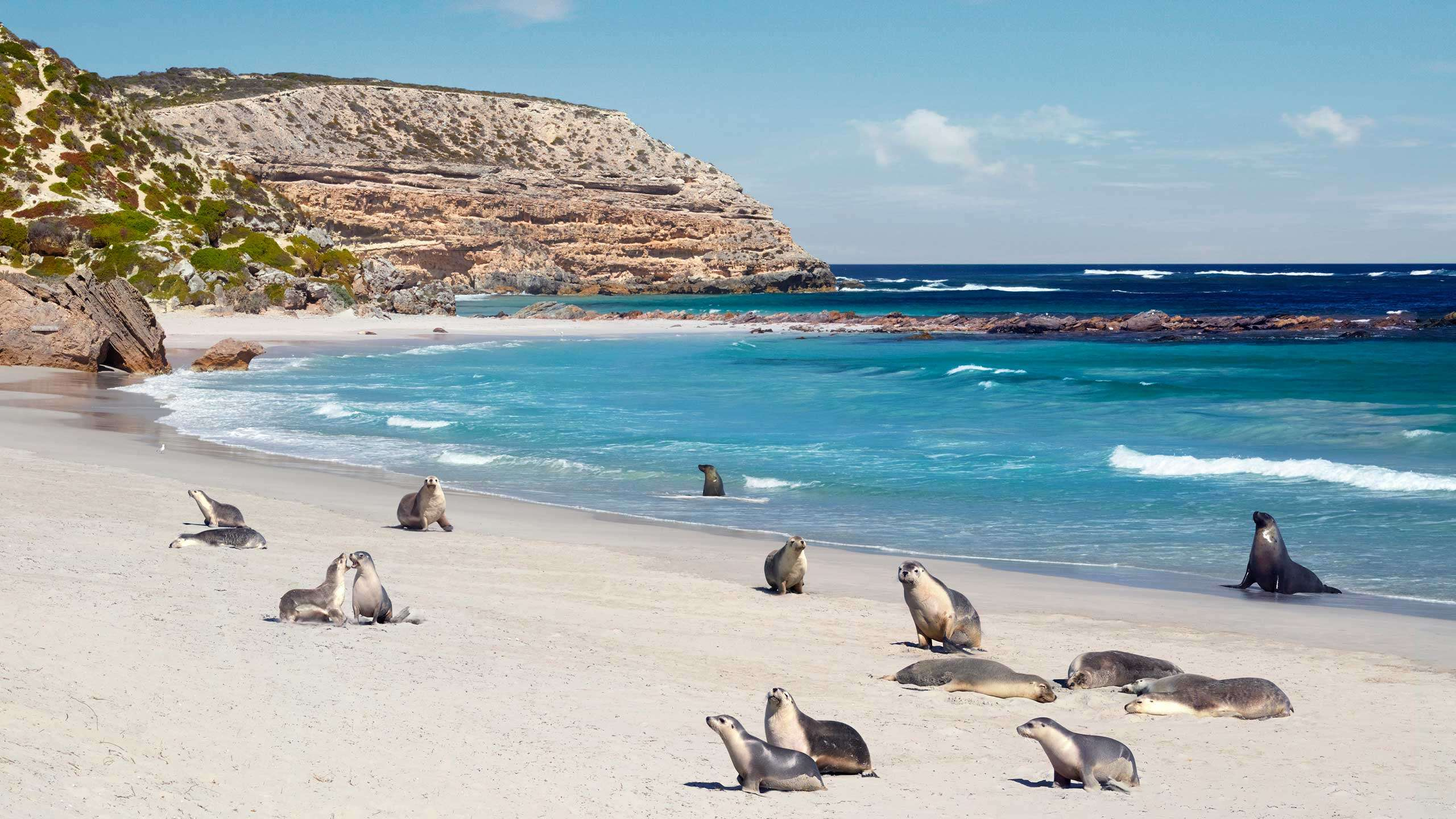 Kangaroo Island Active Explorer 3D2N, Private Guided