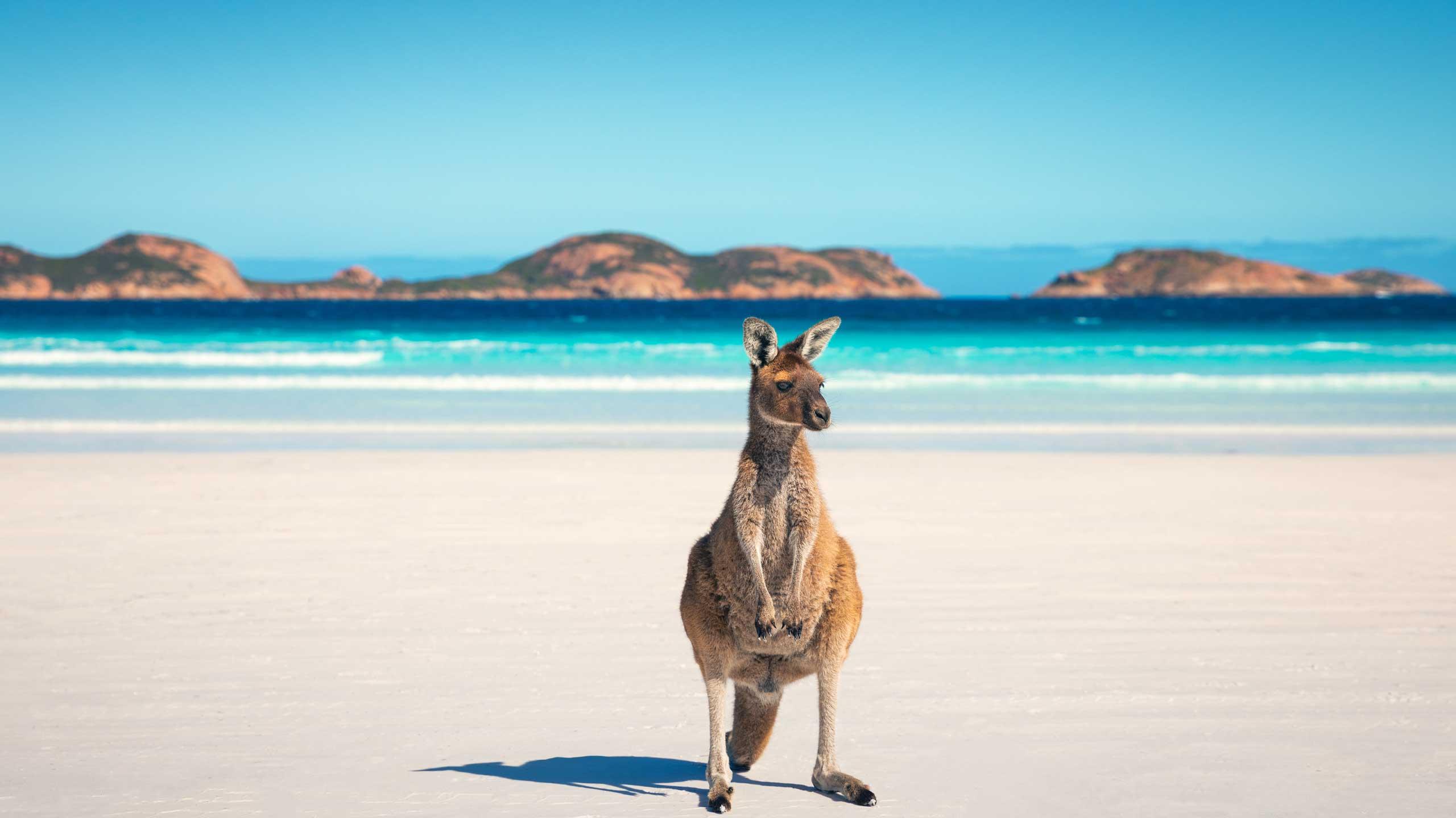 australia-kangaroo-western-australia-tourism-australia