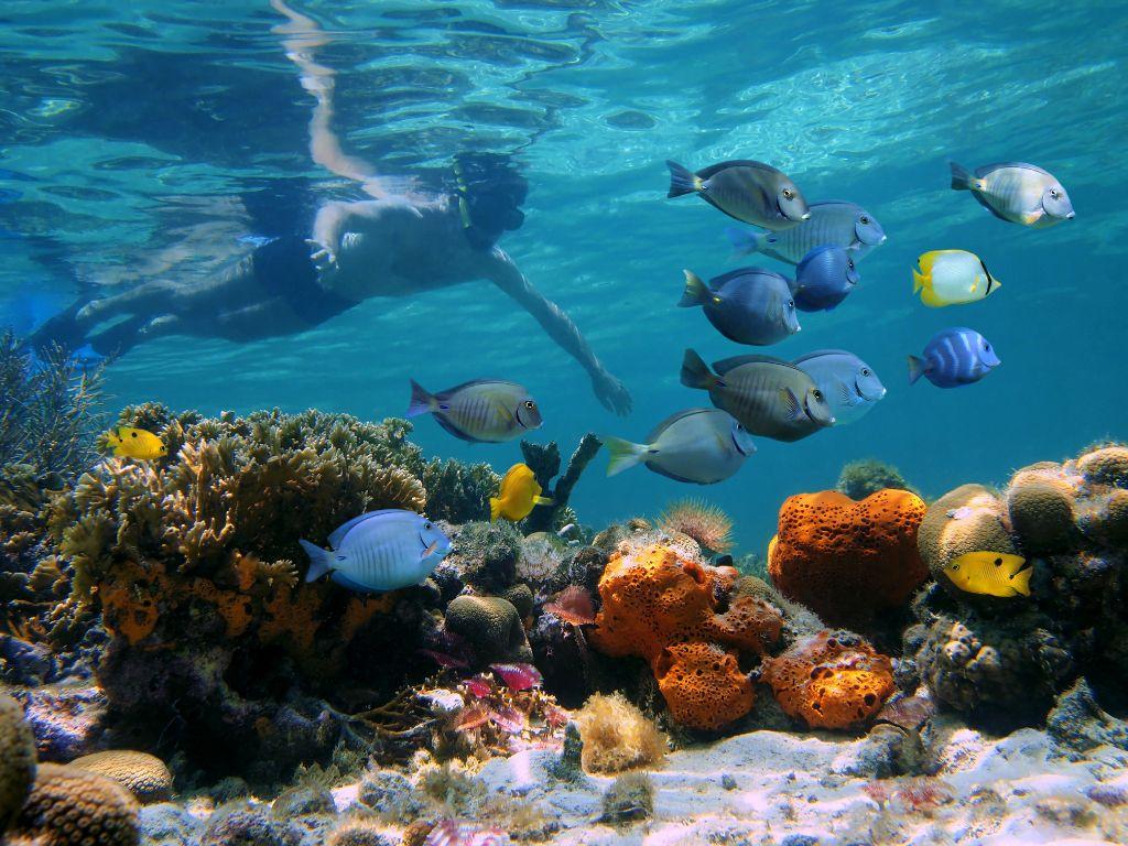 great-barrier-reef-diving