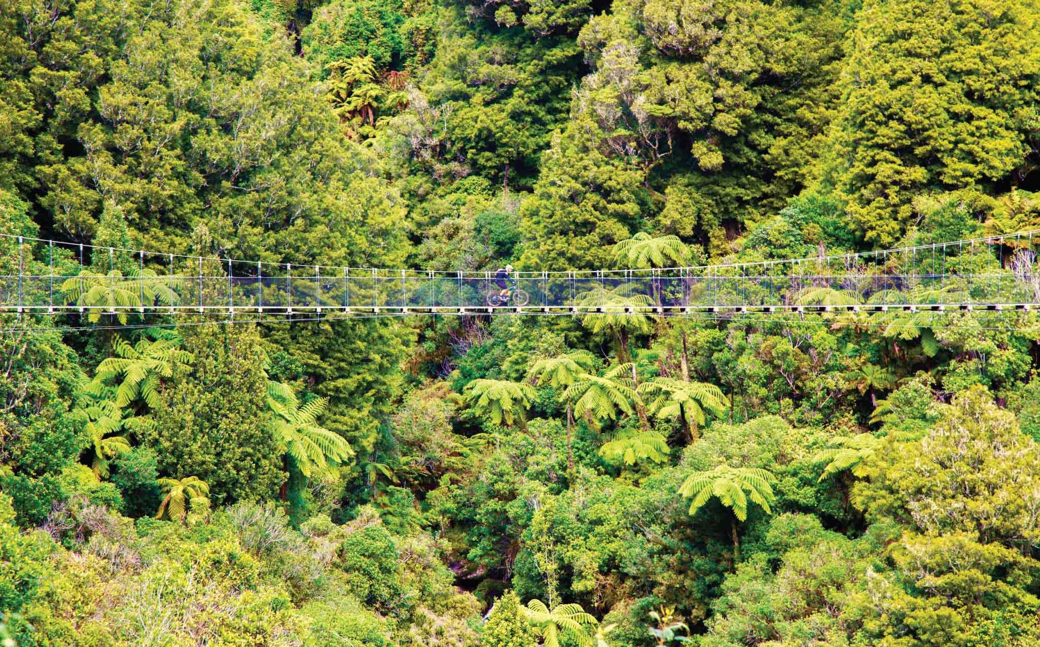 The Timber Trail Cycling Swingbridge