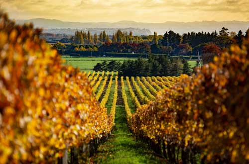north-island-hawkes-bay-wineries-new-zealand-landscape