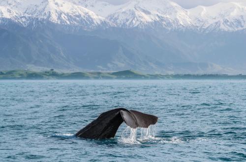 kaikoura-ranges-whale-watching-new-zealand-cruise-south-island