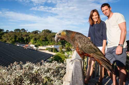 south-island-stewart-island-bird-watching-new-zealand