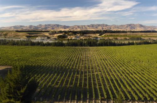 marlbourough-sounds-new-zealand-south-island-winery-vineyard-landscape-scenery
