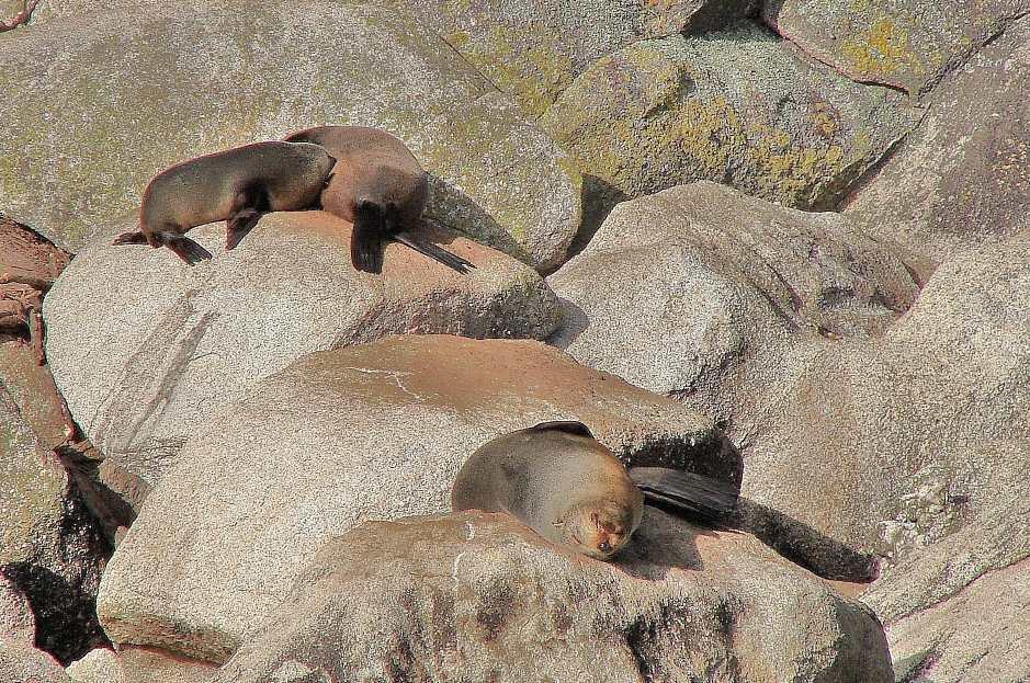 Abel Tasman Walk Seals