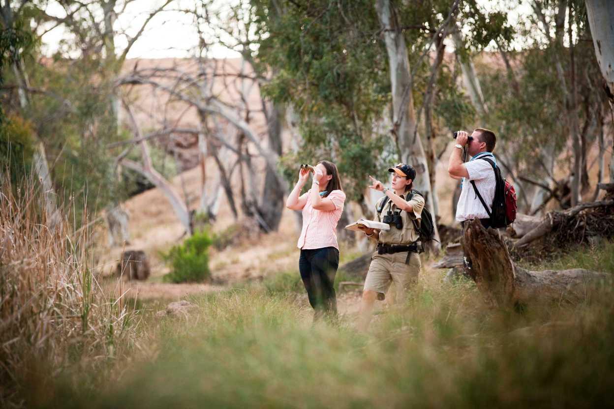 Flinders Ranges Luxury Outback Walk Birdwatching