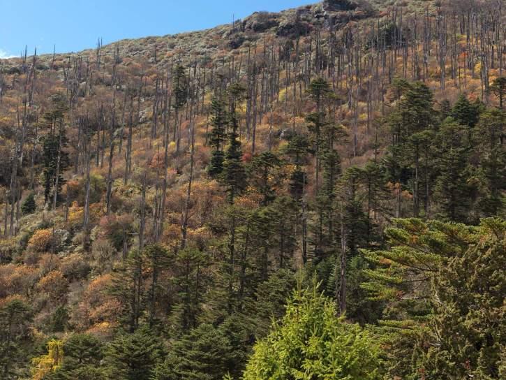 Bhutan Paro Forest