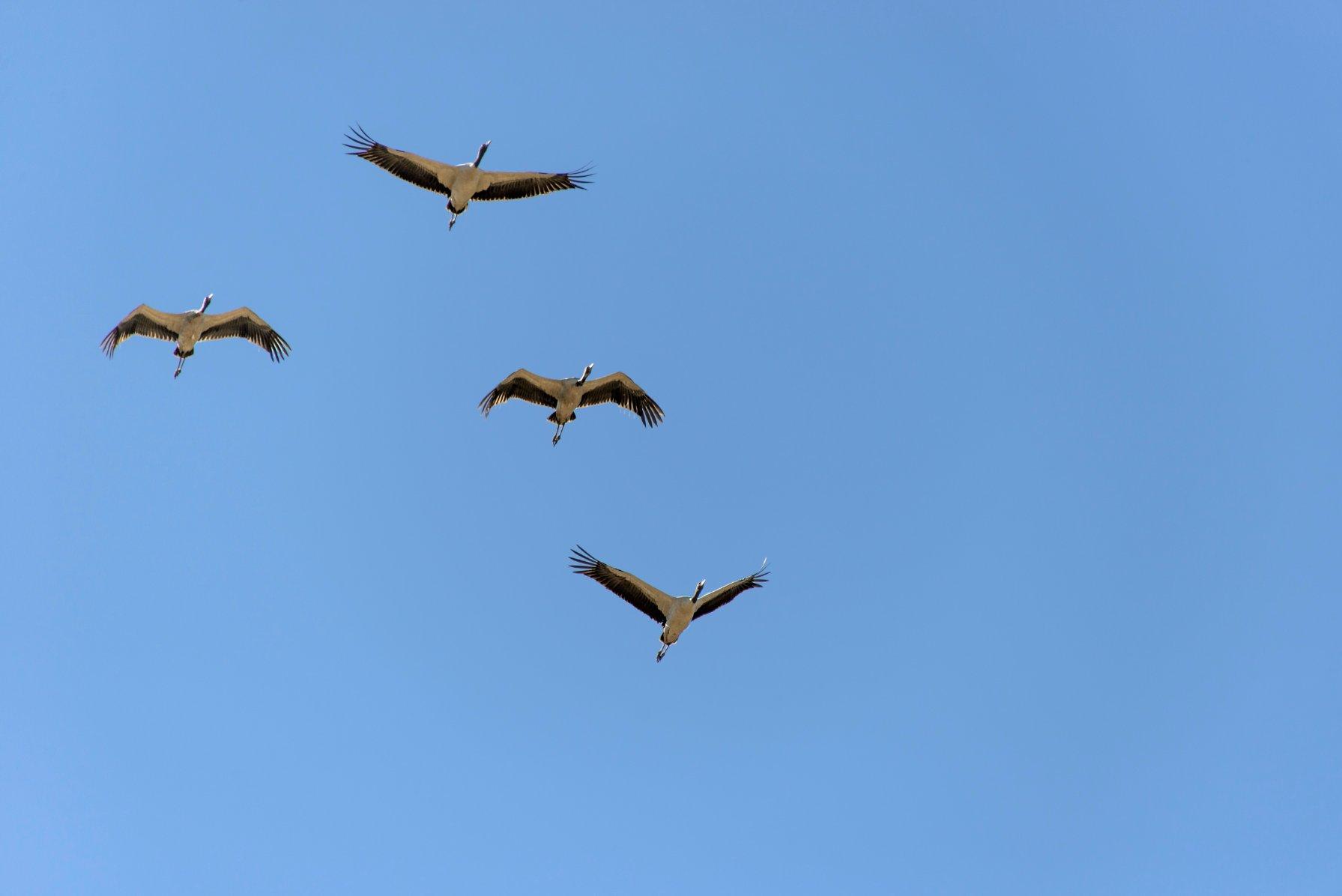 Bhutan Trekking Black Necked Cranes