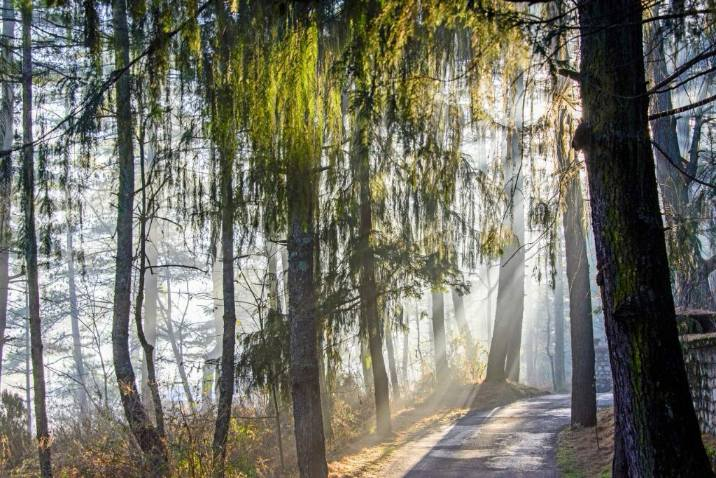 Bhutan Luxury Trekking Pine Forest