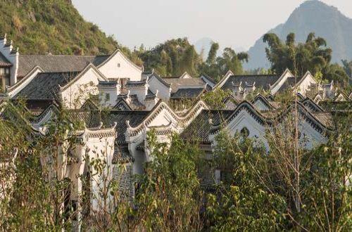 Banyan-Tree-Yangshuo-china-walks