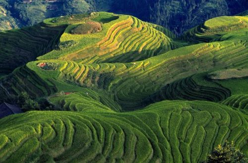 rice-terraces-guilin-china-walking-tour