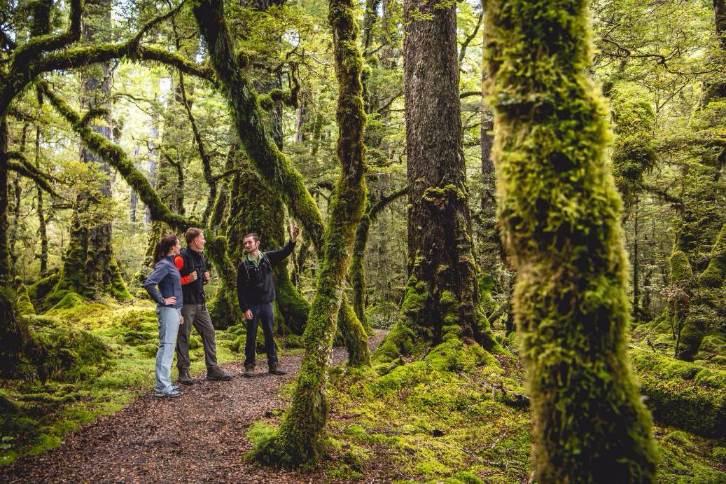 Fiordland Walk forest