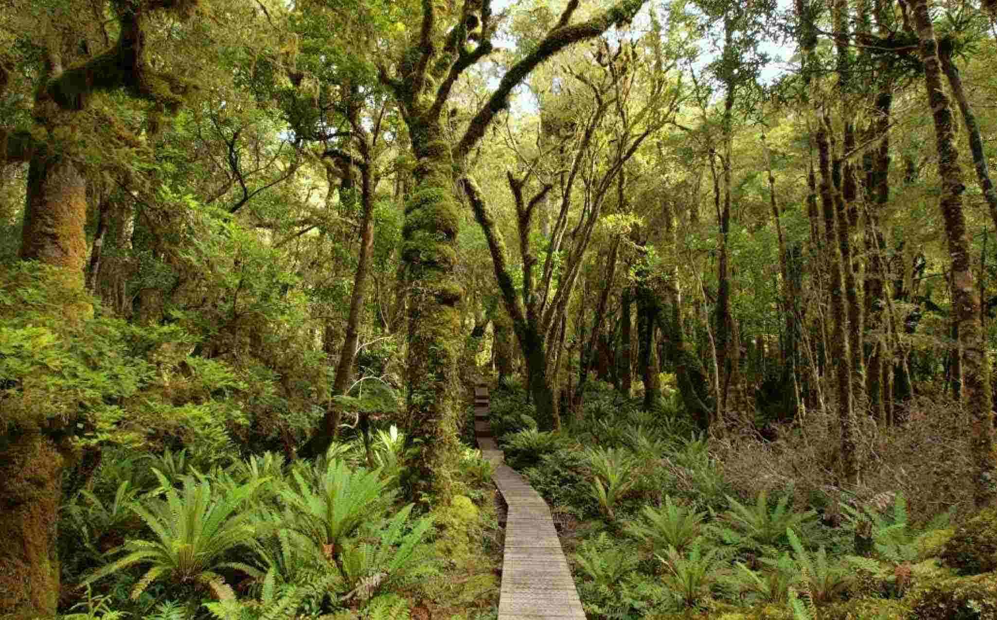 Hump Ridge Track Fiordland National Park