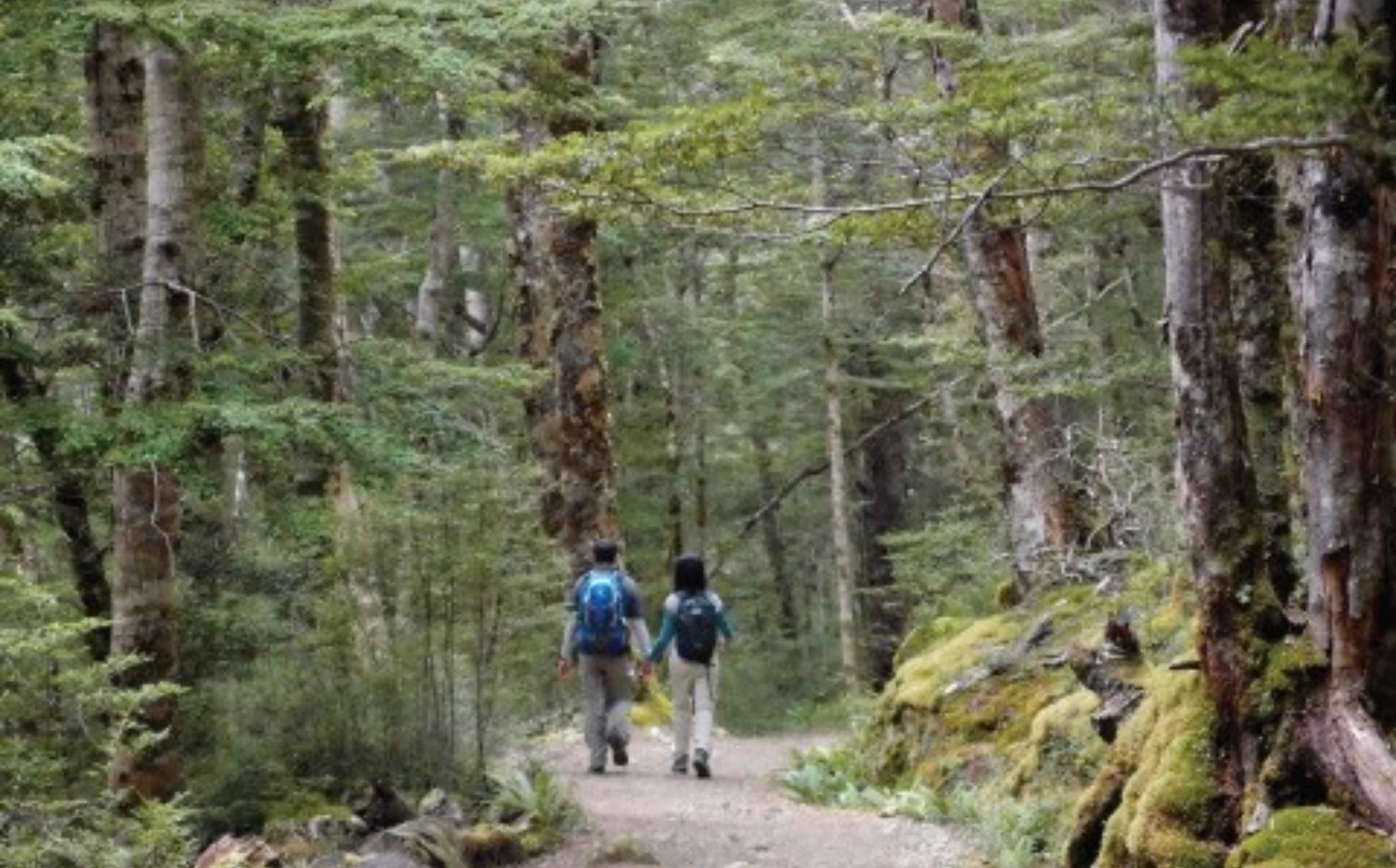 Kepler Track Beech Forest