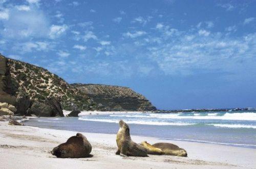 flinders-ranges-outback-kangaroo-island-walk-seal