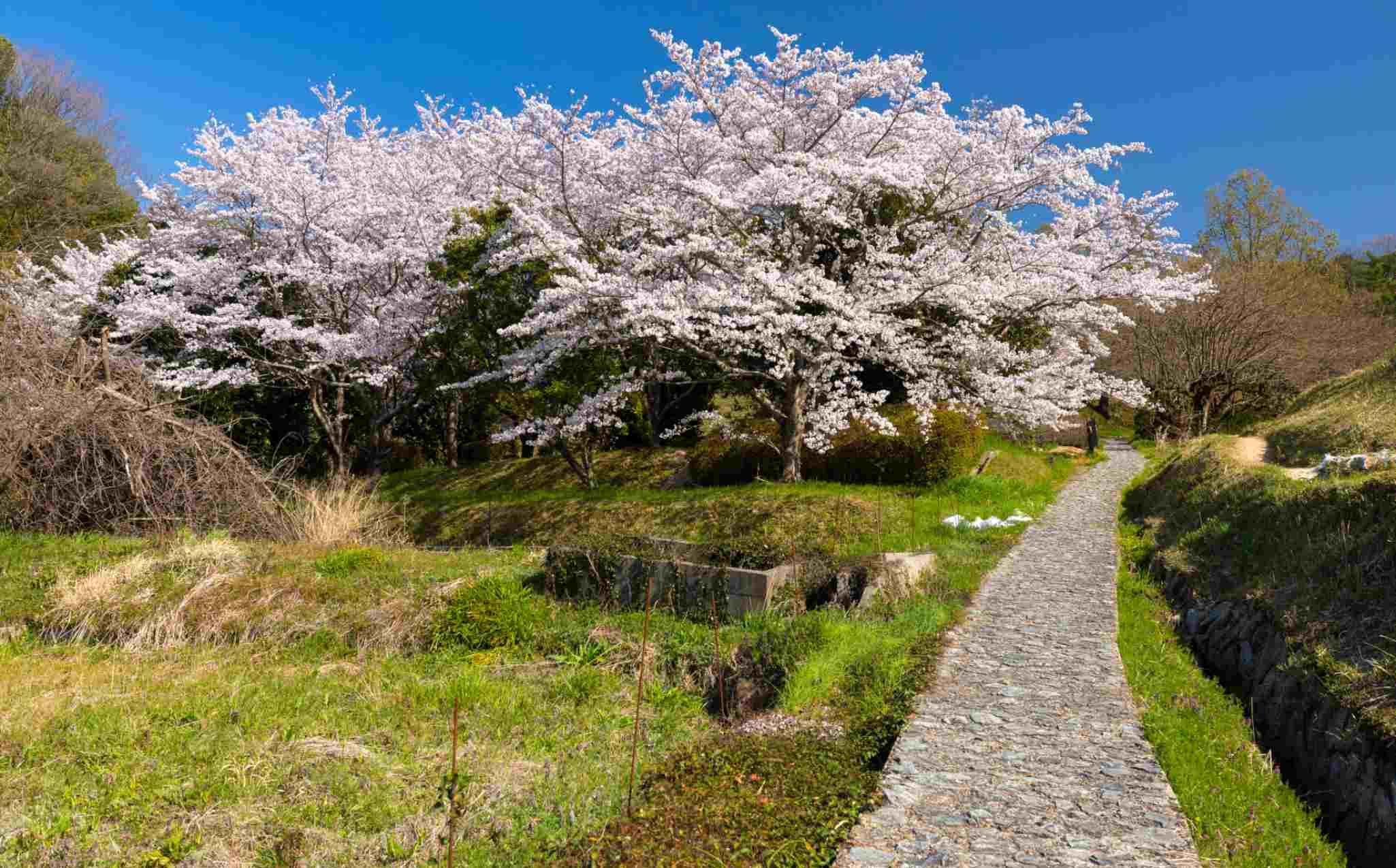 Yamanobe-no-michi Trail