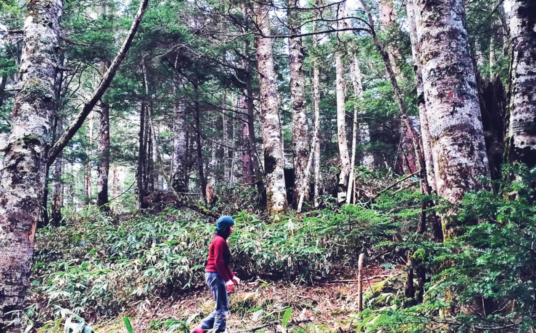 Kamikochi Norikura Kogen Walk