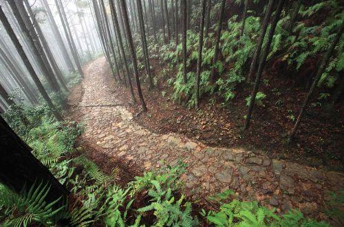 kumano-kodo-walk-forest-trail