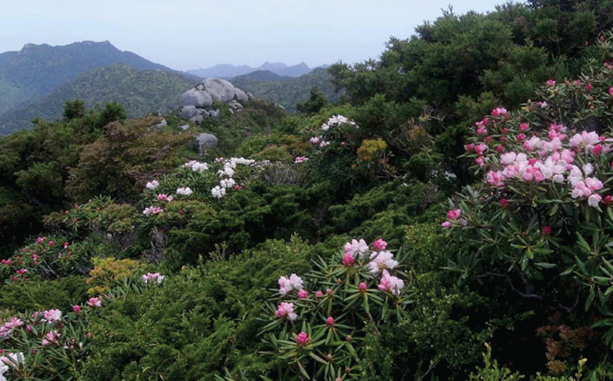 Yakushima Mt. Kuromidake Hike