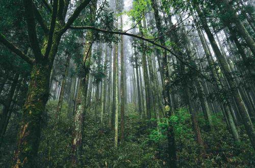 japan-walk-nakasendo-trail-forest-