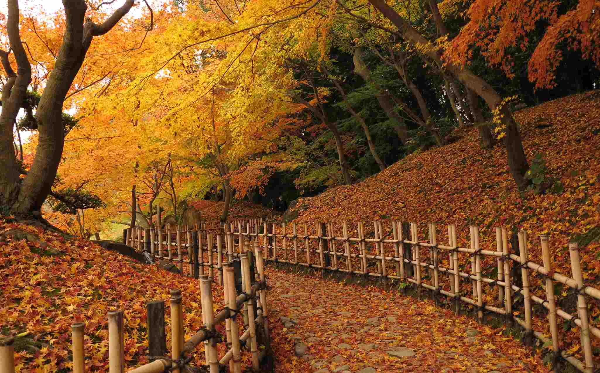 Japan Walk Shikoku Ritsurin Park