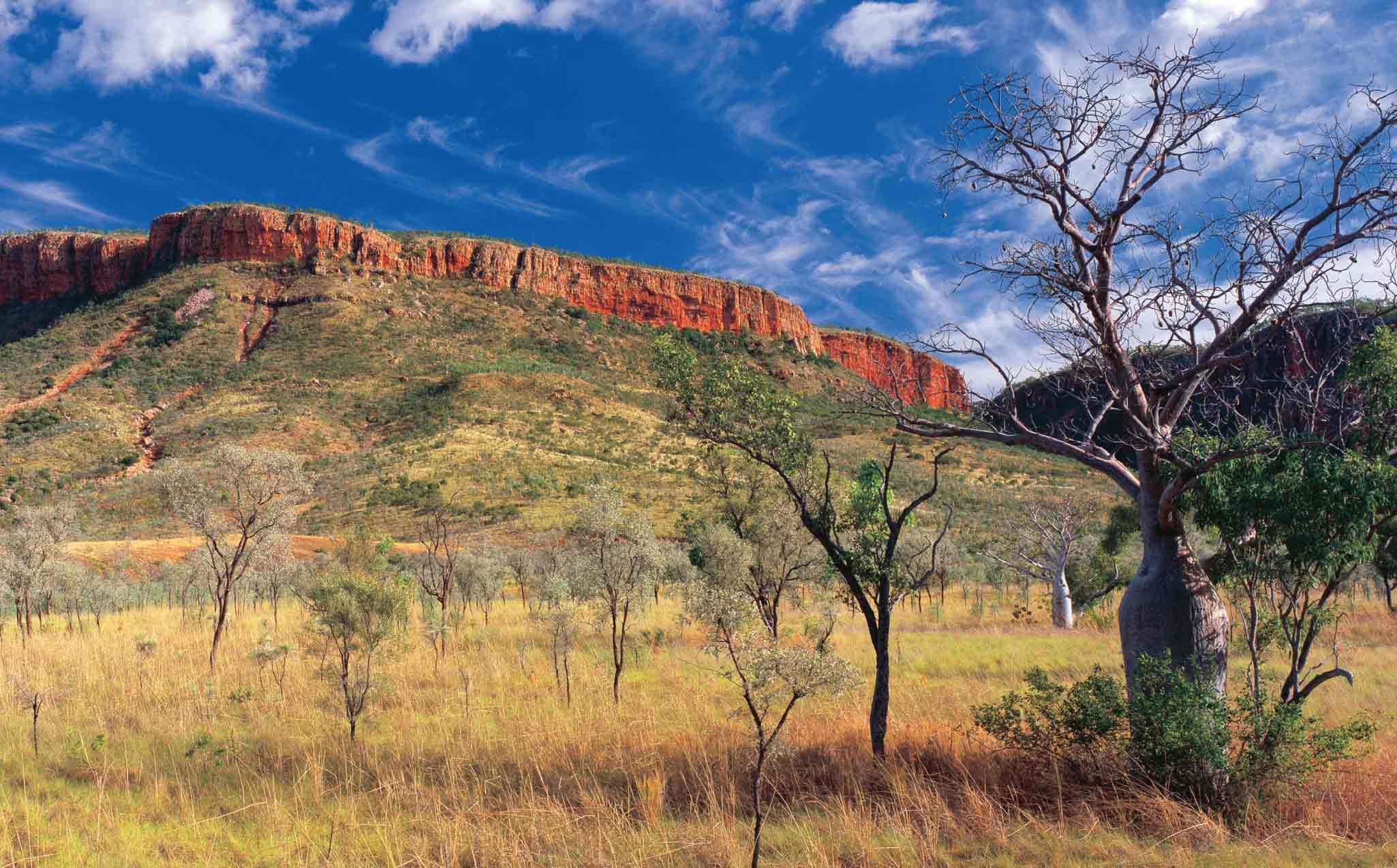 Kimberley Trekking Tour Boab Trees