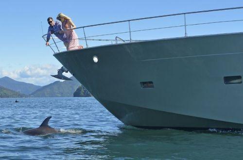 queen-charlotte-track-walk-cruise-watch-dolphin-new-zealand