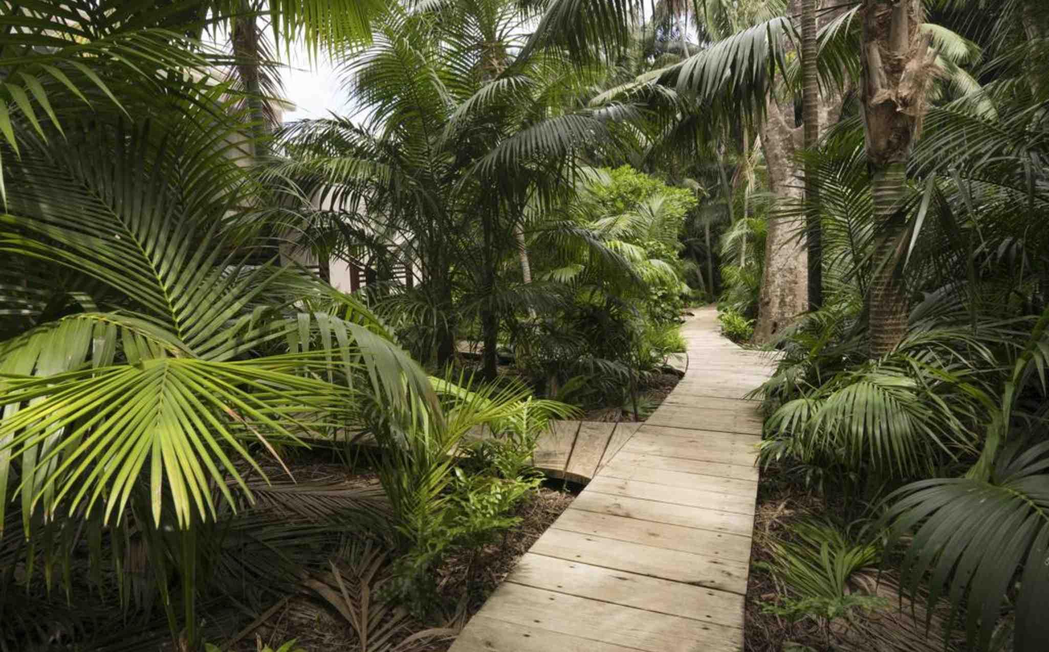Arajilla Retreat Walkway