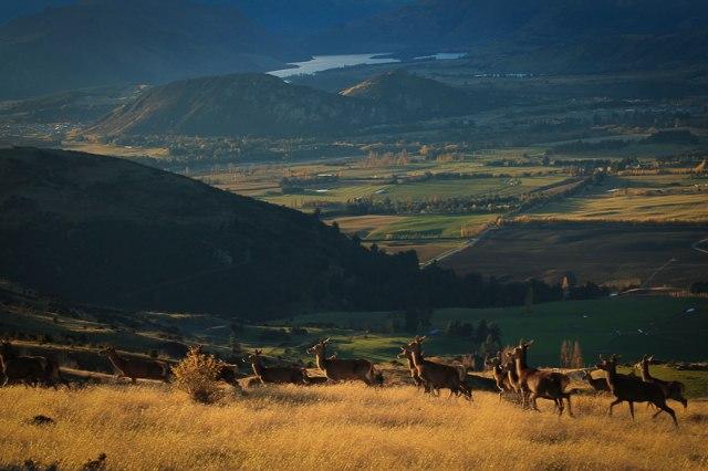 Wanaka High Country 4WD Safari Deer Farm