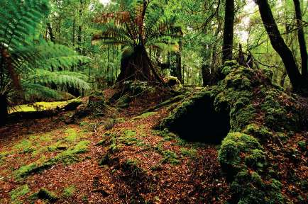 Tasmania Tarkine Wilderness Walk