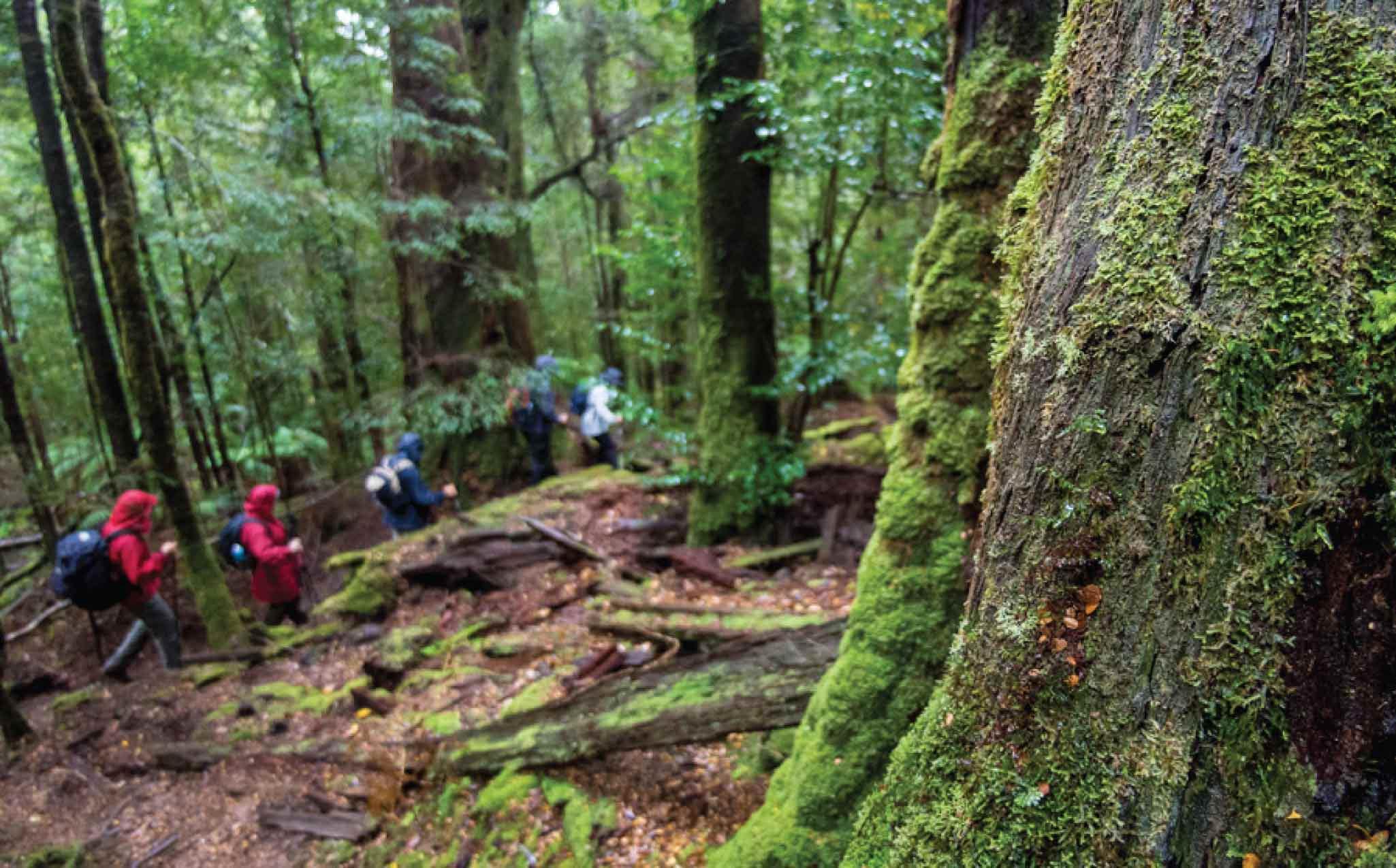 Tasmania Tarkine Trail Walk
