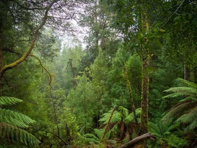 Tasmania Tarkine Rainforest Walk