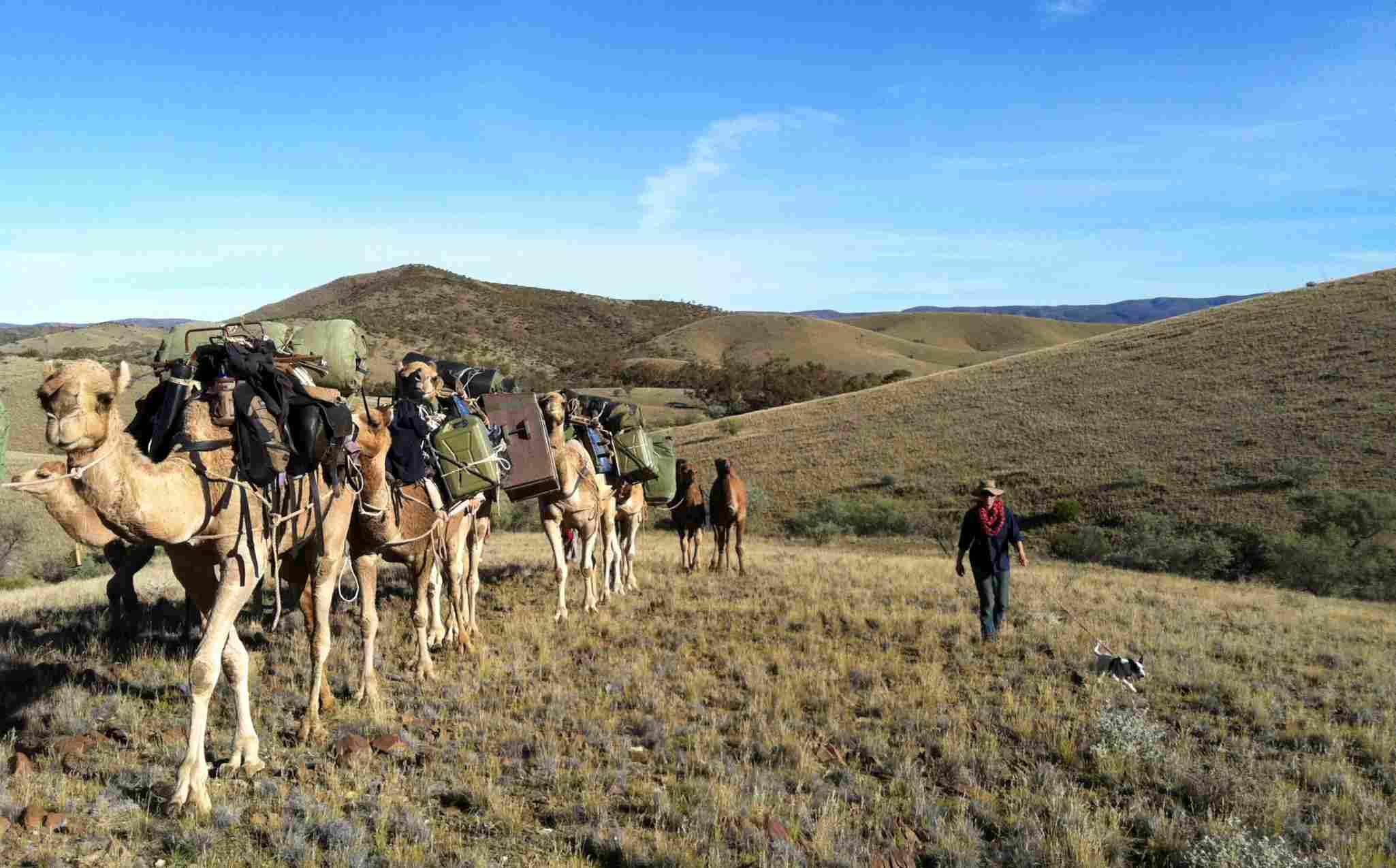 Flinders Rangers Walk Camel Trekking